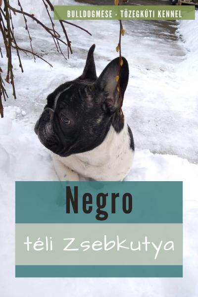 Negro téli Zsebkutya